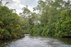 O rio Bentota entre a selva Imagens de Stock Royalty Free