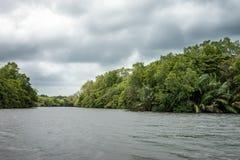 O rio Bentota entre a selva Fotos de Stock