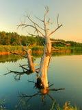 O rio bonito Fotos de Stock Royalty Free