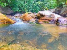 o rio bonito do córrego caiu refrescamento e calma Imagens de Stock