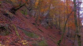 O rio calmo flui em uma floresta bonita do outono filme