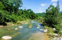 O rio com uma parte inferior rochosa na selva Fotografia de Stock Royalty Free