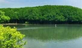 O rio da água traseira com as árvores verdes no mam cresce a floresta com céu fotografia de stock