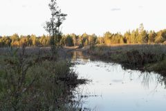 O rio da floresta no por do sol a grama nos pântanos é coberto de vegetação fotos de stock royalty free