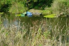 O rio das plantas do prado está no fundo Fotos de Stock
