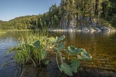 O rio de Belaya nas montanhas dos Ural do sul Imagens de Stock Royalty Free