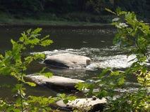 O rio do cristalino Imagens de Stock Royalty Free
