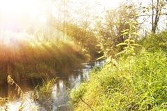 O rio do enrolamento flui entre costas verdes na luz do sol Fotografia de Stock