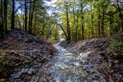 O rio do inverno corre através da floresta Foto de Stock