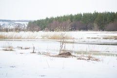 O rio e a floresta do inverno ajardinam no condado imagens de stock