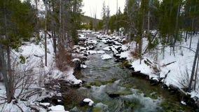 O rio estreito conduz através de uma floresta de árvores altas no inverno vídeos de arquivo