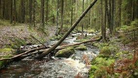 O rio flui abaixo da inclinação vídeos de arquivo