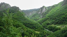 O rio flui entre as montanhas cobertas com o verde montenegro imagem de stock