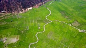 O rio longo da vista aérea curva-se através da grande plantação do arroz video estoque