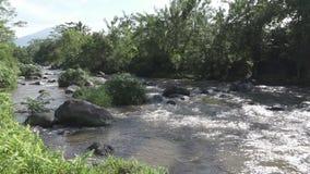 O rio profundo após uma chuva tropical, riverscape surpreendente da montanha com a floresta exótica densa que cresce no riverbank vídeos de arquivo