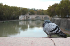 O rio Tiber Fotos de Stock