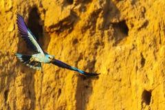 O rolo está voando no por do sol fotografia de stock royalty free