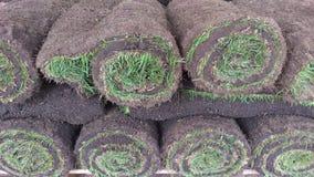 O rolo verde da grama do gramado torceu em um rolo Imagens de Stock Royalty Free