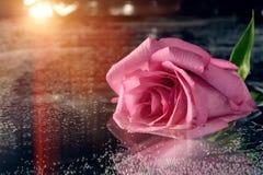 O rosa aumentou na superfície da água escura fotografia de stock royalty free