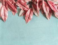 O rosa bonito deixa a beira no fundo azul pastel, vista superior, configuração lisa imagens de stock royalty free