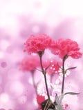 O rosa bonito floresce o fundo Foto de Stock