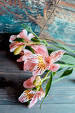 O rosa do Alstroemeria das flores floresce com pétalas manchadas em um fundo de madeira com uma textura muito interessante Imagem de Stock Royalty Free