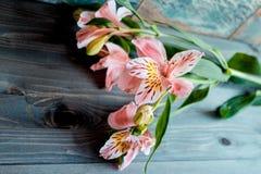 O rosa do Alstroemeria das flores floresce com pétalas manchadas em um fundo de madeira com uma textura muito interessante Imagens de Stock Royalty Free