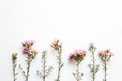 O rosa floresce a composição Imagens de Stock