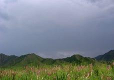 O rosa floresce montanhas escuras altas a passagem de montanha de Altai no vale verde imagem de stock