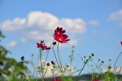 O rosa floresce o outono Fotos de Stock Royalty Free