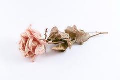 O rosa murchado aumentou em um fundo branco Fotografia de Stock Royalty Free