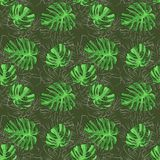 O rosteniya tropical deixa o verde do mistério em um fundo marrom com o contorno fino na parte traseira bitmap ilustração stock