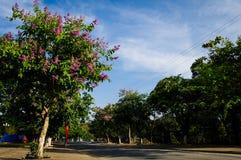 O roxo do verão floresce a estrada Fotos de Stock Royalty Free