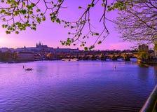 O roxo em Praga fotografia de stock royalty free