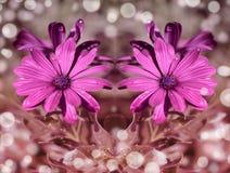 O roxo floresce o papel de parede do fundo do bokeh da reflexão Fotos de Stock Royalty Free