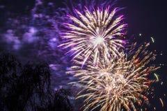 O roxo vermelho do ouro da celebração dos fogos-de-artifício do fogo de artifício sopra a árvore fotografia de stock royalty free