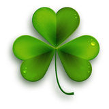 O símbolo do dia de Patricks de Saint, vector a folha realística do trevo ilustração stock