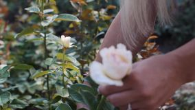 O ` s da mulher entrega o corte da rosa do branco filme