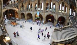 O salão principal do museu - esqueleto do dinossauro dentro Fotos de Stock