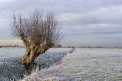 O salgueiro congelado Imagem de Stock Royalty Free