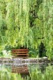 O salgueiro do banco de madeira e chorar é espelhado no lago imagem de stock royalty free