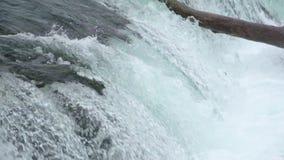 O salmão de salto de travamento do urso de Brown no meio do ar em ribeiros cai, parque nacional de Katmai, Alaska video estoque