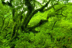 O Salta verde Fotografia de Stock Royalty Free