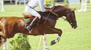 O salto do cavalo Foto de Stock Royalty Free