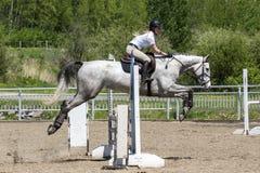 O salto do cavalo Fotos de Stock Royalty Free