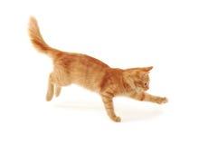 O salto do gatinho fotografia de stock royalty free