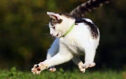 O salto do gato Imagens de Stock Royalty Free