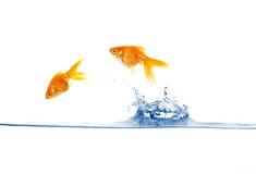 O salto do Goldfish Fotos de Stock
