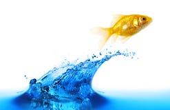 O salto do Goldfish   Fotografia de Stock
