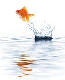 O salto do Goldfish fotos de stock royalty free